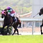 【高松宮記念2016】展望|昨年覇者エアロヴェロシティが取消で日本馬だけの対決に!