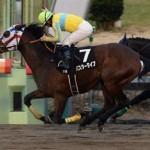 【マーチステークス2016】最終予想|混戦模様だがこの馬から勝負!祝、藤田菜七子騎手が芸能界デビューへ