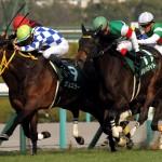【桜花賞2016】予想|メジャーエンブレムが最有力候補だが現時点での軸馬はあの馬から!