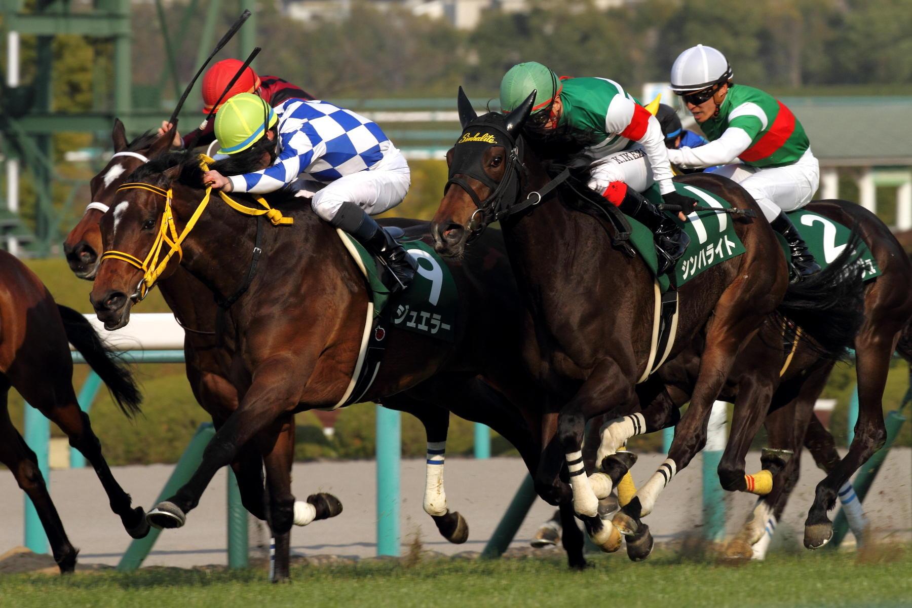 【桜花賞2016】予想 メジャーエンブレムが最有力候補だが現時点での軸馬はあの馬から!