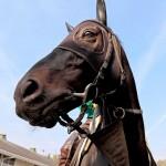 【大阪杯2016】最終予想 ラブリーデイなどGⅠ馬5頭が集まったが本命は牝馬のあの馬から勝負!