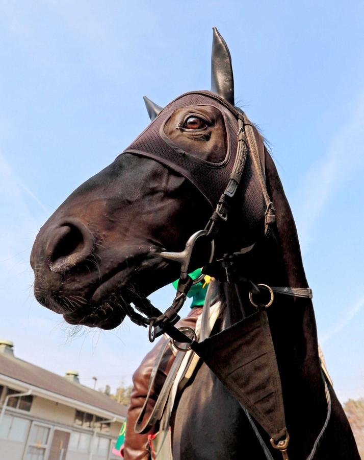 【大阪杯2016】最終予想|ラブリーデイなどGⅠ馬5頭が集まったが本命は牝馬のあの馬から勝負!