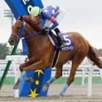 【東京プリンセス賞2016】最終予想|桜花賞馬モダンウーマンが2冠へ視界良好!馬券の組立てが大事!