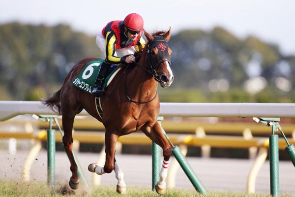 【NHKマイルC2016】予想|ロードクエストがメジャーエンブレムに牡馬のプライドを見せる!