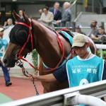 【安田記念2016】予想(東京芝1600m)|モーリスのライバル!?外国馬コンテントメント出走!