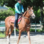 【オークス(優駿牝馬)2016】回避などの事情で賞金上位馬よりも抽選馬を狙いたい!