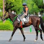 プロキオンステークス2019|最終予想|7月7日(日)中京11R|人気上位馬の状態面は問題なし!?今年も荒れる可能性は低いので3連単で勝負!!