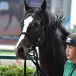 白富士ステークス2019|最終予想|今週から東京競馬場が開幕、開幕馬場だからこそ先先行脚質が勝負を握る!!ブラックスピネルが大逃げをかますか!?