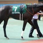 【関屋記念2016】予想|サマーマイルシリーズ2戦目、中京記念2着馬ピークトラム参戦!