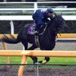 【オールカマー2016】予想|宝塚記念馬マリアライトがここから始動!