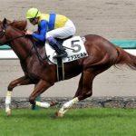 【東京新聞杯2017】出走予定馬|予想|エアスピネル春G1に向けて試金石!