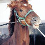 【大阪杯2017】出走予定馬|予想|予想オッズ8.8倍ヤマカツエース勢いそのままにG1制覇へ!!