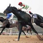 【みやこステークス2017】出走予定馬 予想 エピカリスは古馬に勝てるのか?