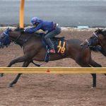 【クイーンカップ2018】最終予想|阪神ジュベナイルフィリーズ3着馬マウレアを軸に馬連5点勝負!!