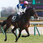 エプソムカップ2018|出走予定馬|ダイワ軍団には珍しい東京巧者ダイワキャグニーが秋に向けて結果を残せるか!?