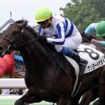 函館2歳ステークス2018|出走予定馬|有力馬診断|世代最初のJRA重賞を制するのは!?ダービー血統ナンヨーイザヨイが一等星になれるか!?
