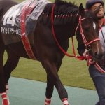 東京ハイジャンプステークス2018|最終予想|1番人気は4枠4番ルペールノエルも本命馬はあの馬から勝負!!3連複4点勝負!!
