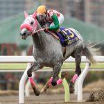 エルムステークス2018|出走予定馬|有力馬診断|C・ルメール騎手は今週は札幌に戻ってリッカルドに騎乗!!