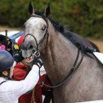 京都金杯2019|出走予定馬|全馬追い切り診断|明け4歳馬の良血パクスアメリカーナは反動が課題!?マイル実績のあるあの馬に注目!!