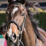 シルクロードステークス2019|出走予定馬|有力馬診断|最強世代である4歳馬のラブカンプーが登場!!高松宮記念に向けてどのようなレースを見せてくれるのか!?