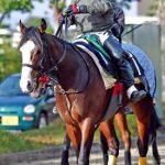 羅生門ステークス2019|最終予想|良血馬イシュトヴァーンが1番人気も本命馬はあの勢いのある騎手が鞍上の〇〇から3連単勝負!!