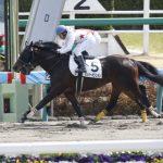 名古屋城ステークス2019|最終予想|3月23日(土)中京11R|三つ巴の一戦で本命に指名したのは夏から成長しているあの馬!!