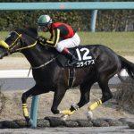アハルテケステークス2019|最終予想|6月22日(土)東京11R|混戦模様も本命はダート戦複勝率100%の馬から勝負!!
