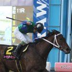 関東オークス2019|最終予想|6月12日(水)川崎11R|データは中央馬優勢も、本命は地方で偉業が懸かる〇〇から勝負!!
