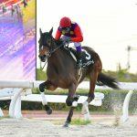 スプリングカップ2020 最終予想 2月24日(月・祝)名古屋11R 梅桜賞を快勝したニュータウンガールが登場も本命は別馬のアノ馬から勝負!!